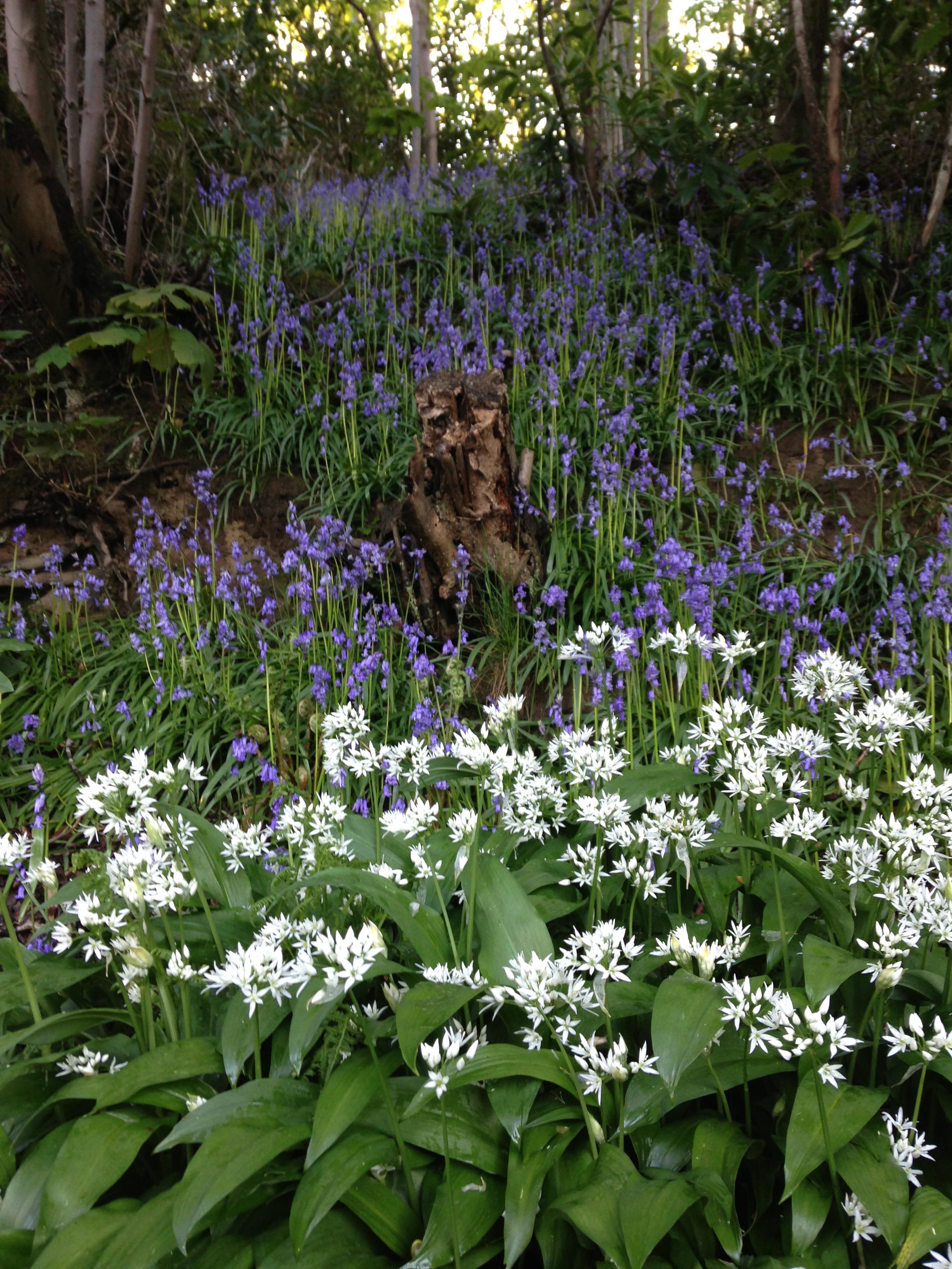Hornby Castle Garden Open weekend