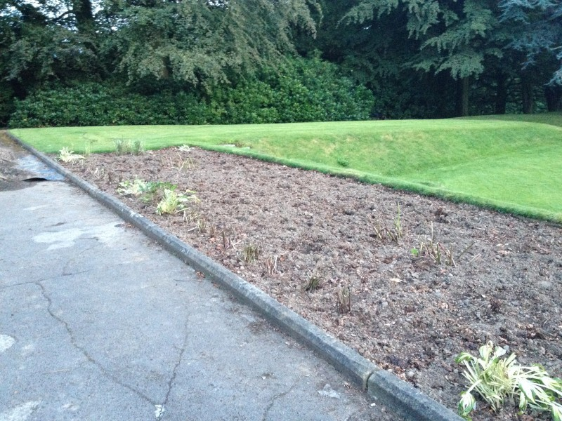 New borders dug in to the main lawn